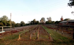 Oreti-Estate_Kenya_3